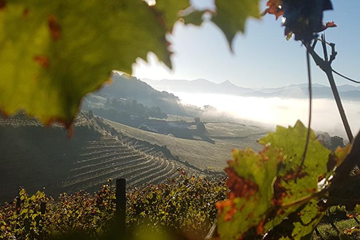 cave irouléguy-visite-vignes-st etienne de baigorry