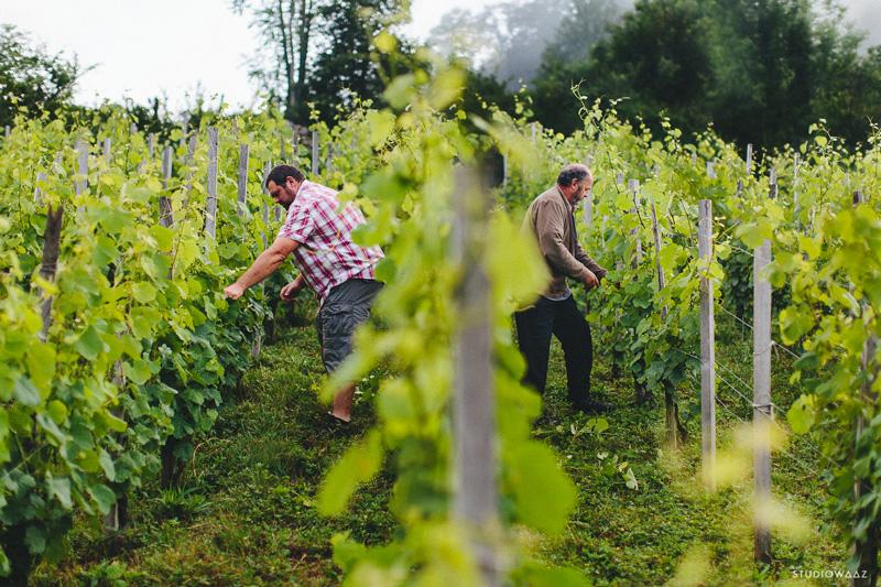 cave irouléguy-visite-vignes-vin